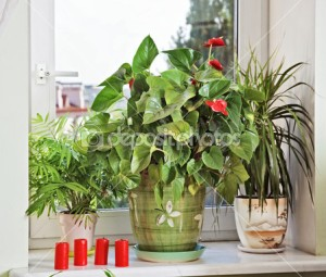 depositphotos_3476263-Flowers-and-red-candles-on-window-sill
